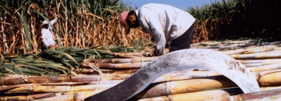 retos-industria-azucarera-afecta-procesos-logisticos